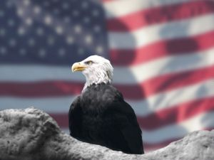 Eagle and the American Flag