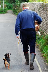 Will Walking My Dog Help Me Lose Weight?